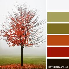 Outono #5