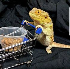 You have been visited by the Shopping Dragon. You will get discounts on all your groceries Funny Lizards, Pet Lizards, Cute Reptiles, Animal Jokes, Funny Animal Videos, Funny Animal Pictures, Funny Photos, Cute Lizard, Cute Gecko