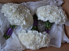 bridesmaids' bouquets of white carnations