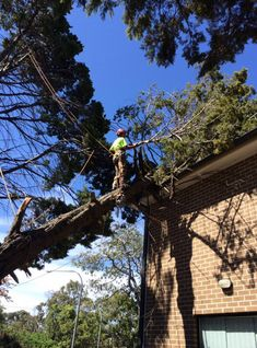 Emergency tree removal Sydney comes from the necessity of removing a tree as fast as possible from a property as it may pose a serious danger to the integrity or safety of the property, structures, goods or people on the property. For more information you can call us in 0439413375.
