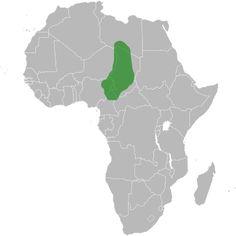 Kanuri people - Wikipedia, the free encyclopedia