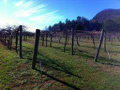Tiger Mountain Vineyards in Tiger, Georgia.