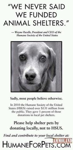 THE HUMANE SOCIETY OF THE UNITED STATES DOES NOT HELP HELP TO FUND ANIMAL SHELTERS- If you want to help shelter pets, donate to local rescue/adoption groups or your local Shelter.