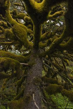 Complicated Tree and Moss