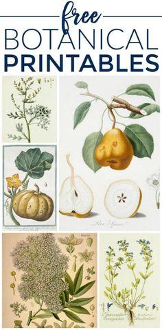 Gorgeous Botanical Prints {Free Printables}