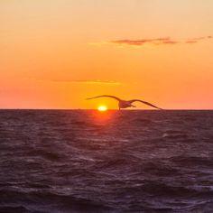 #Polen2015 #Poland #Polska #Kołobrzeg #Kolberg #BalticSea #Ostsee #PortEntrance #Hafeneinfahrt  #Sunset #Sonnenuntergang #Seagull #Möwe
