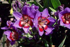 Plantas y flores curiosas - Página 40 - Foro de InfoJardín