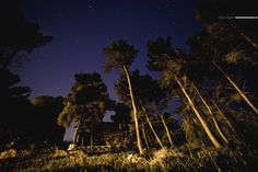 Pineta by PAOLO LIGGERI on 500px
