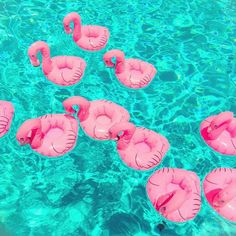 Pink Flamingos | Ins