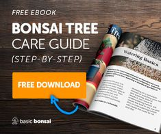 Learning bonsai tree care isn't difficult, but it isn't straight forward either. In this article, you'll get a crash course in raising flourishing bonsai. Buy Bonsai Tree, Bonsai Trees For Sale, Bonsai Tree Care, Bonsai Tree Types, Indoor Bonsai Tree, Mini Bonsai, Bonsai Pruning, Bonsai Soil, Bonsai Plants