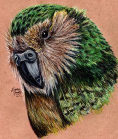 Kakapo by ~KristynJanelle on deviantART