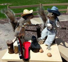 Novelty Squirrel Banjo Band Taxidermy Mount | eBay