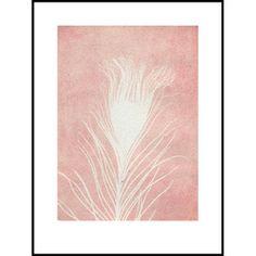 Print - Peacock Rose - 30*40 cm. | Pernille Folcarelli - Klik for mere information