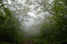 """Въезд в туман"" (заказник ""Леопардовый""). © М. А. Кречмар (http://kiowa-mike.livejournal.com/). #Tree #Trees #Mist #Mists"