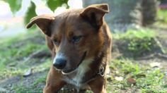 SEE IT: Loyal dog stars in tearjerker organ donor ad