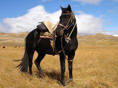 Estancia Huechahue, Argentina Horse in field www.rusticvacations.com
