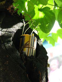 Magazine roll guerilla gardening and seedbombs