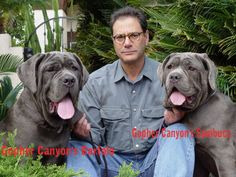 #Neapolitan #Mastiff become friends to their owners)