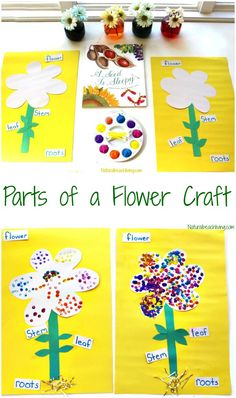The Best Parts Of A Flower Craft For Kids Natural Beach Living - The Best Parts Of A Flower Craft For Preschool And Kindergarten Flower Crafts For Kids Are Perfect For Learning About Flowers Flower Science For Kids Reggio Flower Activities For Preschooler Preschool Garden, Preschool Science, Preschool Learning, Science For Kids, Science Ideas, Teaching, April Preschool, Montessori Activities, Preschool Themes By Month