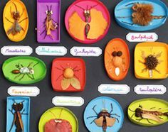 Discover recipes, home ideas, style inspiration and other ideas to try. Fox Crafts, Nature Crafts, Projects For Kids, Art Projects, Crafts For Kids, Land Art, Bug Art, Insect Art, Christmas Drawing
