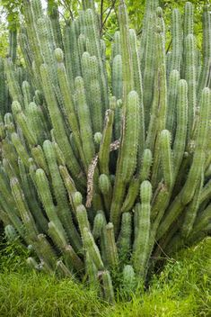 132 Types of Cacti (A to Z Photo Database) Types Of Succulents Plants, Propagating Succulents, Types Of Plants, Planting Succulents, Cactus Plants, Succulent Plants, Mini Cactus Garden, Easter Cactus, Kinds Of Cactus