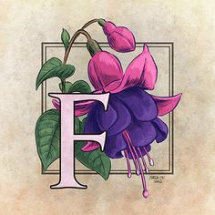 F is for Fuchsia by Stephanie Smith