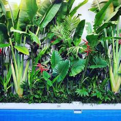 Small Tropical Gardens, Tropical Garden Design, Tropical Plants, Plants By The Pool, Hawaiian Plants, Exotic Plants, Tropical Backyard Landscaping, Florida Landscaping, Landscaping Ideas