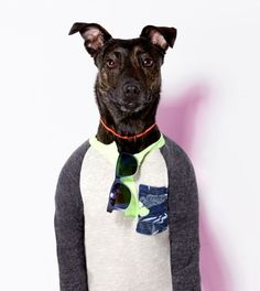 The American Beagle Outfitters Look Book Is a Dog Lover's Dream - Fashionista