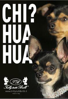#trillytuttibrilli #dogclothes #modacani #dog #fashiondog #cane #chihuahua