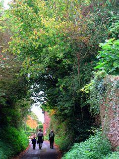 A walk down a country lane....