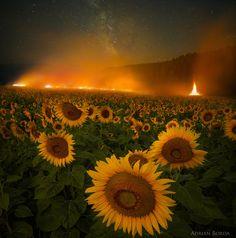 One Hundred Thousand Burning Suns by Adrian Borda on 500px