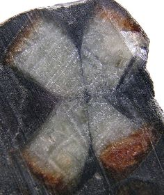 Andalusite var. Chiastolite | Lancaster, Massachusetts. The variety chiastolite commonly contains dark inclusions of carbon or clay which form a checker-board pattern when shown in cross-section. An aluminum nesosilicate mineral.