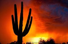 Saguaro and Sunset - Scottsdale, Arizona, Instagram post date: 04-20-2017 - When there is a storm in the area, the light can be just amazing at sunset in the Sonoran Desert, as seen in this photo I photographed in North Scottsdale, Arizona a few years ago in late October. . #mattsuessphoto #celebrationoffineart #landscape_lover #ultimate_nature #wondersofnature #naturephotography #amazingearth #wondersoftheworld #unlimitedplanet #awesomeglobe #stormysky #stormclouds #wonderso
