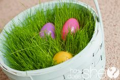 Grow Your Own Easter Basket Grass! No more messy store bought plastic grass. This is one of the best Easter activities for your family! Kids love to watch it grow! - Crafts Diy Home Easter Crafts, Holiday Crafts, Holiday Fun, Easter Ideas, Kid Crafts, Easter Decor, Spring Crafts, Holiday Ideas, Hoppy Easter