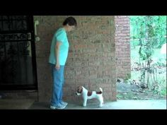Teaching a dog to back up without using body pressure