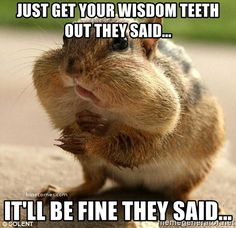 Funny wisdom teeth images and memes to share with a family member or friend who is recovering after their wisdom teeth surgery Surgery Humor, Teeth Surgery, Oral Surgery, Wisdom Teeth Meme, Teeth Quotes, Getting Wisdom Teeth Out, Funny Signs, Funny Jokes, Hilarious