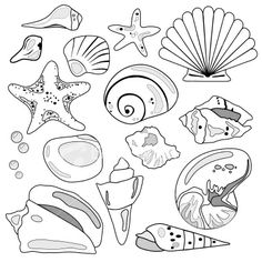free printable starfish coloring pages dopepicz see more sea shell collection royalty free stock vector art illustration