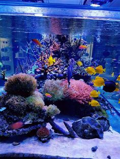 Many aquarium owners crave to someday own a saltwater tank displaying numerous kinds of coral. This may be achieved is fast easy steps if you use coral starter Aquarium Set, Coral Reef Aquarium, Tropical Aquarium, Aquarium Design, Marine Aquarium, Planted Aquarium, Saltwater Fish Tanks, Saltwater Aquarium, Freshwater Aquarium
