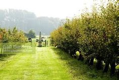 Image result for avenue of fruit trees