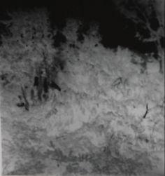 Pinhole image//negative//Trees