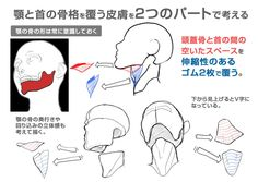 【イラスト豆知識】顎の描き方 – ビジネスアニメ