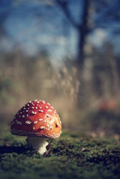 antidote to beauty -