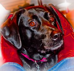 The face of the most loving pet....beautiful sweet and loyal...