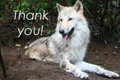 <3 Save The Wolves! <3