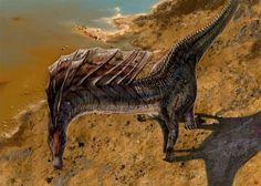 Amargasaurus - Cheung Chung Tat - Prehistoric life