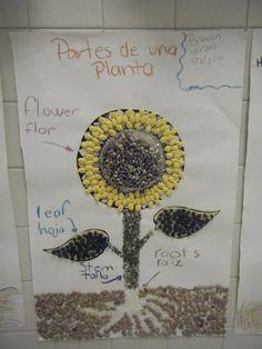 Partes de una planta-se le olvido las semillas