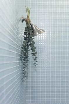 """Tie eucalyptus to your shower head with twine. Steam will rise up towards the eucalyptus, filling the bathroom with a refreshing scent."" I LOVE soaking wet eucalyptus! Eucalyptus Shower, L Eucalyptus, Fee Du Logis, Diy Bathroom, Spa Bathrooms, Bathroom Ideas, Bathroom Inspiration, Jungle Bathroom, French Bathroom"