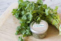 How to Dry Cilantro at Home | LIVESTRONG.COM