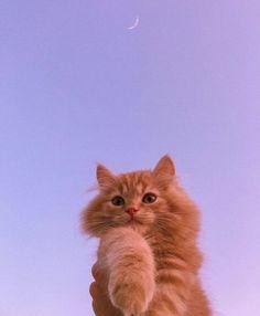 Cute Baby Cats, Cute Little Animals, Kittens Cutest, Cats And Kittens, Cute Dogs, Adorable Animals, Wallpaper Gatos, Cute Cat Wallpaper, Animals And Pets