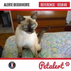 07.04.2017 / Chat / Blagnac / Haute-Garonne / France